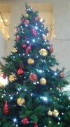 Tree20061224