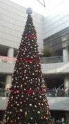 Tree220061224